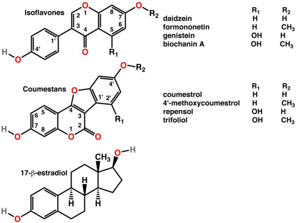 Phytoestrogen là gì? Có tốt cho sức khoẻ không?